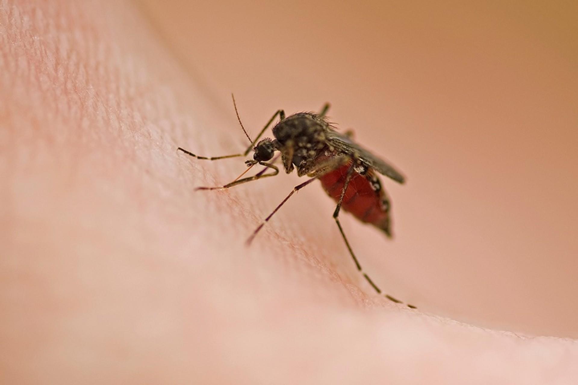 Confirmado em um jovem de 21 anos o primeiro caso de febre amarela no Paraná