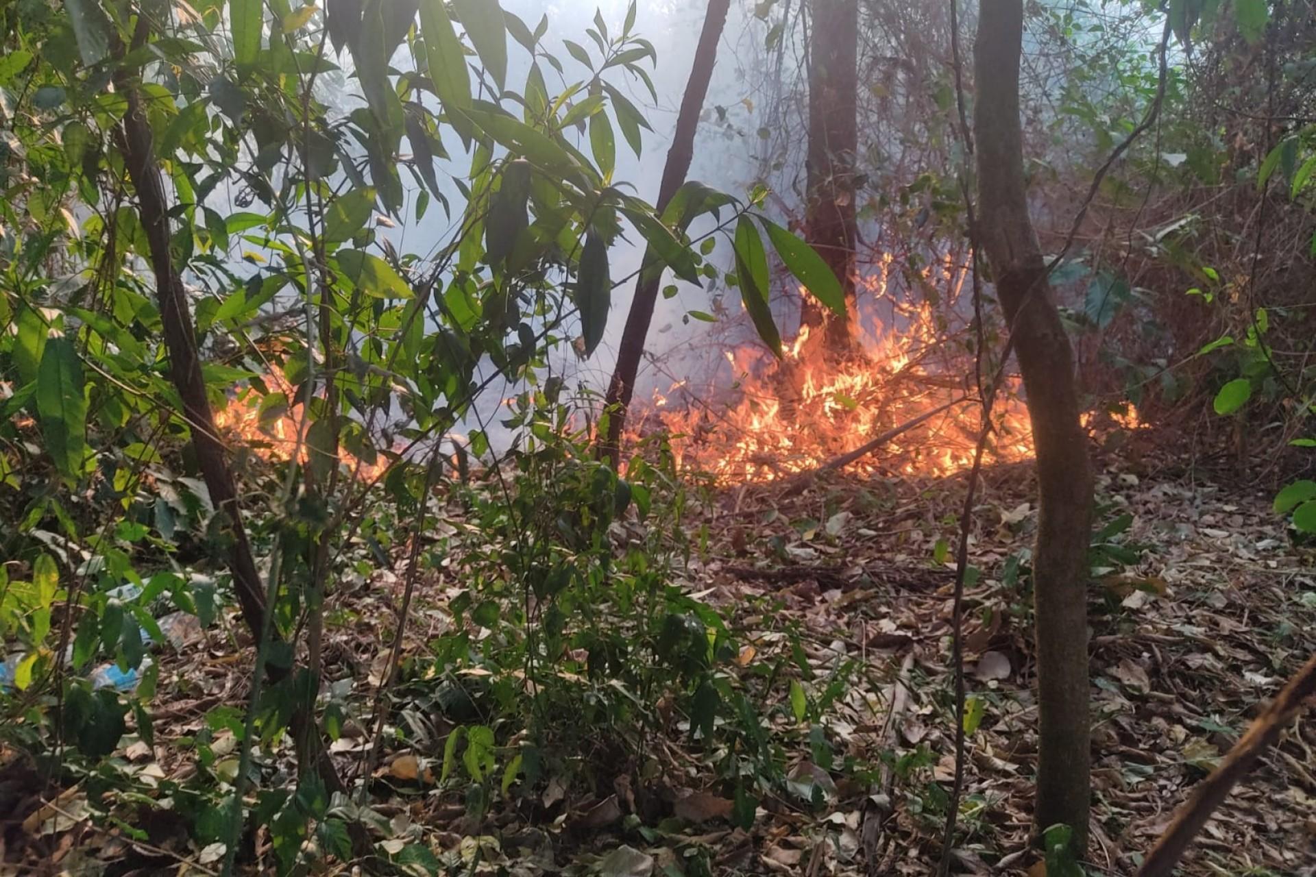 Defesa Civil de Missal tem atuado no combate a incêndios ambientais
