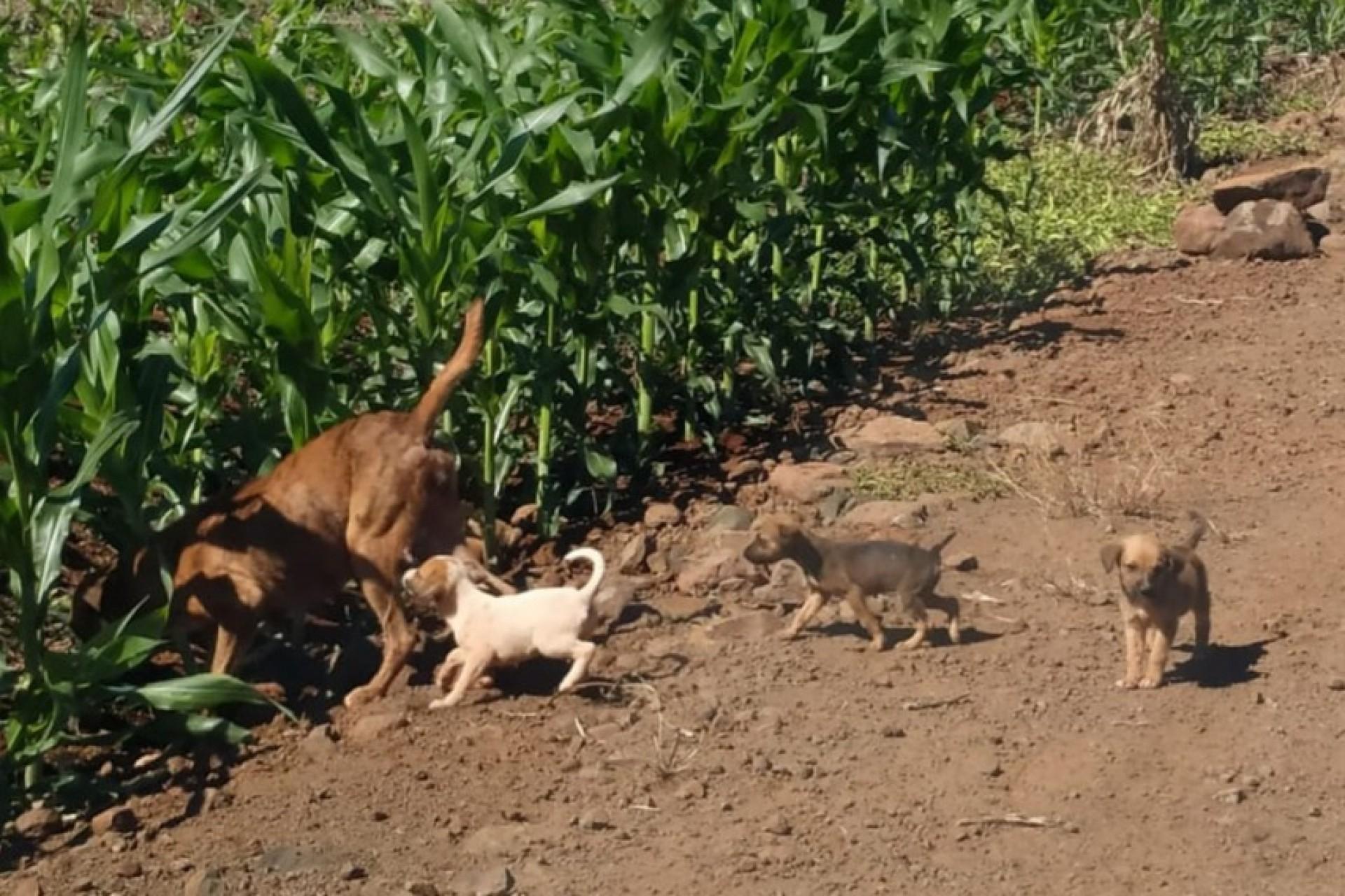 Maus tratos: cães são abandonados no interior de Missal