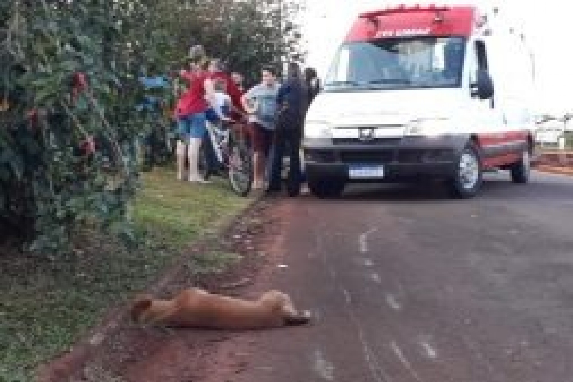Motociclista sofre acidente após atropelar dois cães em Itaipulândia