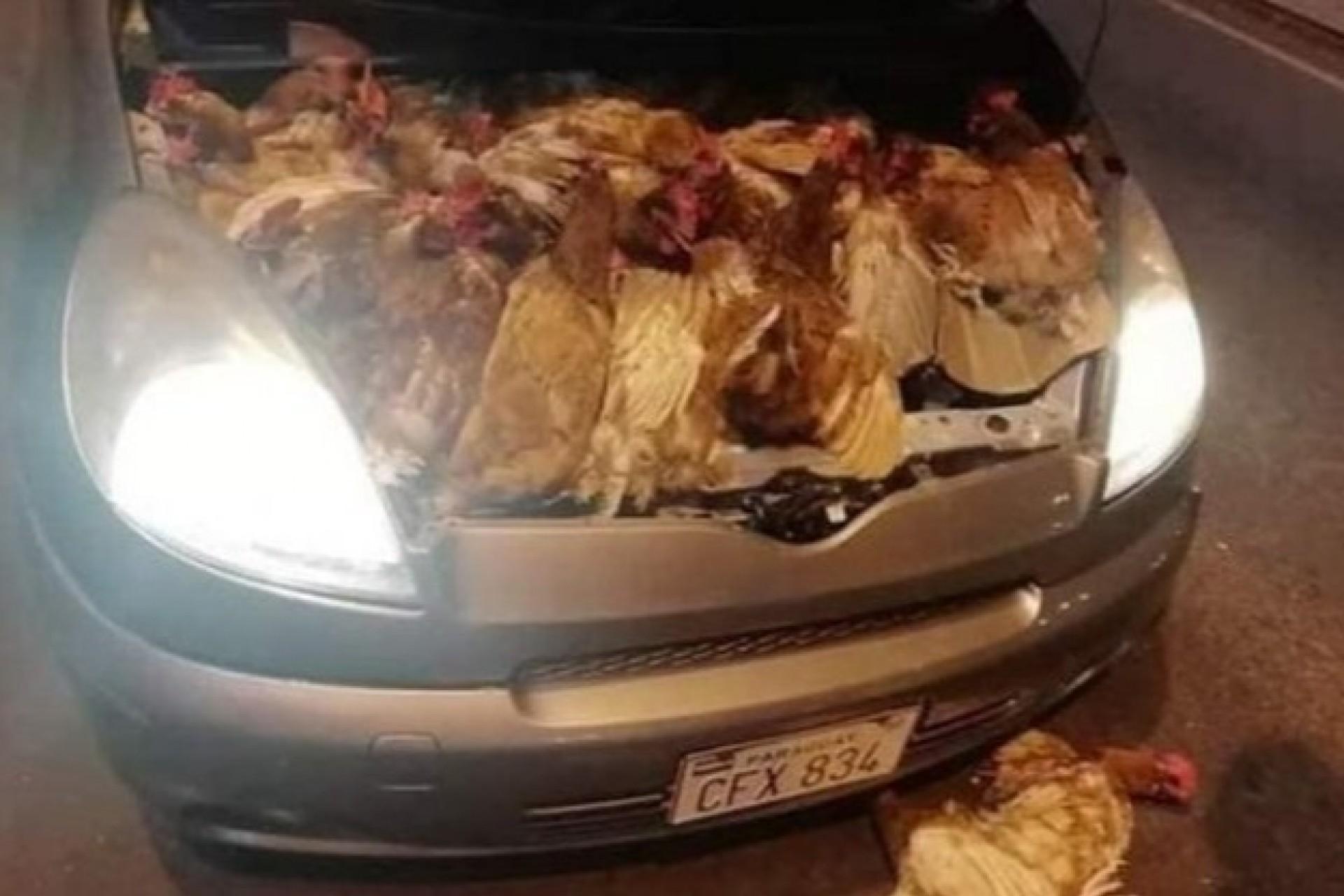 Motorista é preso tentando entrar com galinhas escondidas no motor de carro em Ciudad Del Este