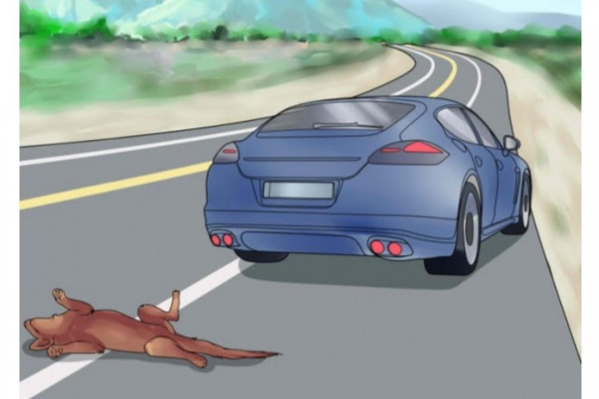 Motoristas deverão prestar socorro a animais atropelados no Paraná