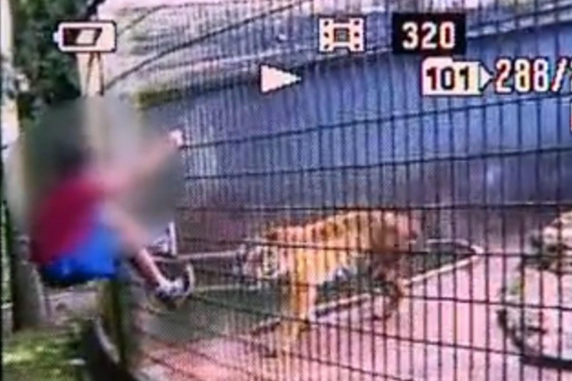 Pai de menino que teve braço amputado após ser atacado por tigre em Cascavel é condenado