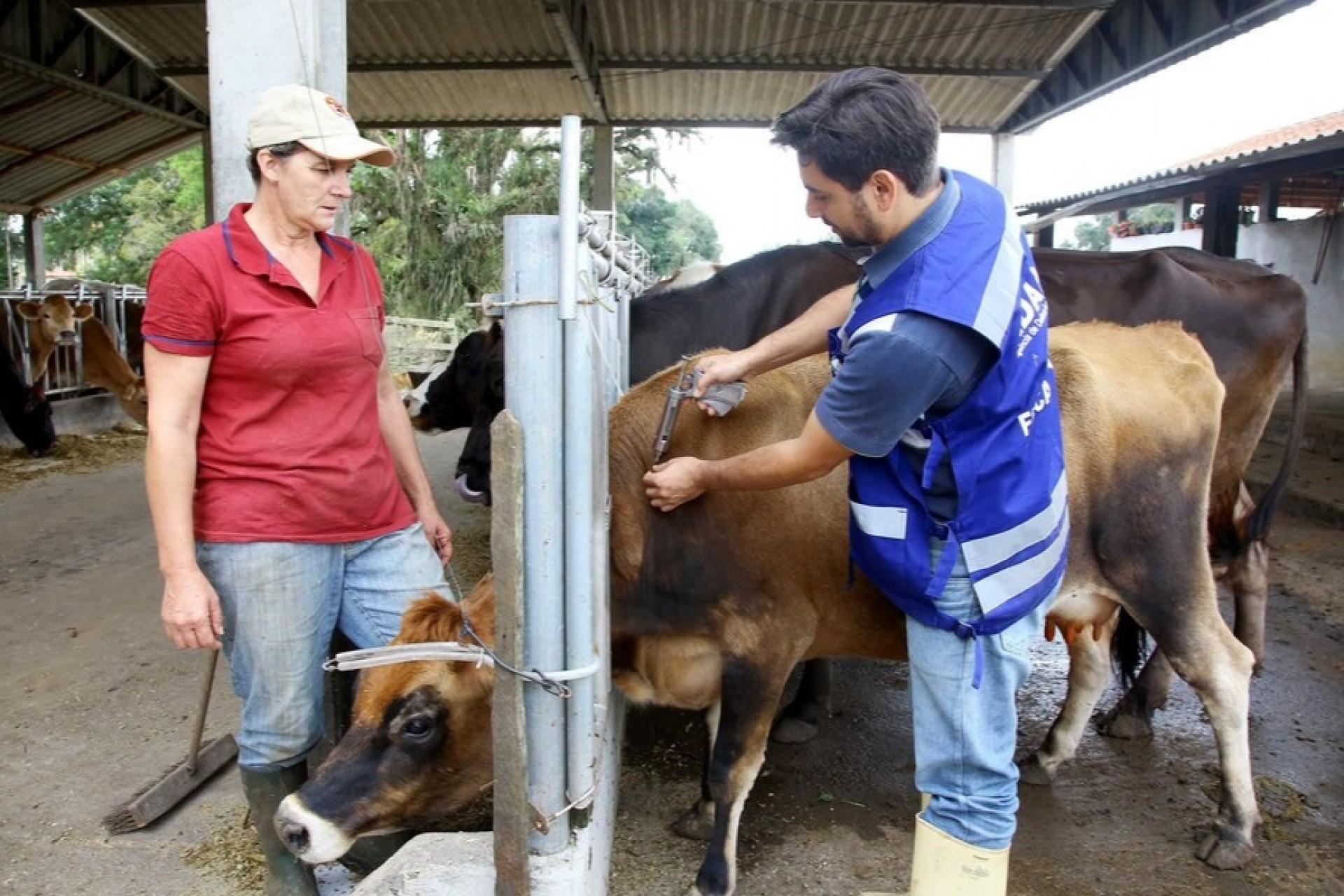 Paraná inicia os fóruns sobre o fim da vacinação contra aftosa