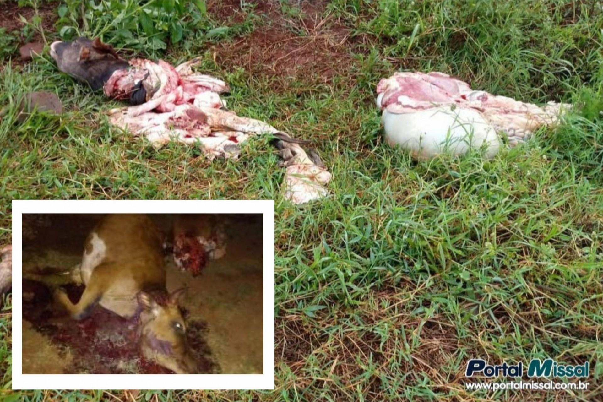 Polícia Civil de Missal tem lista de suspeitos nos crimes de furtos de gado