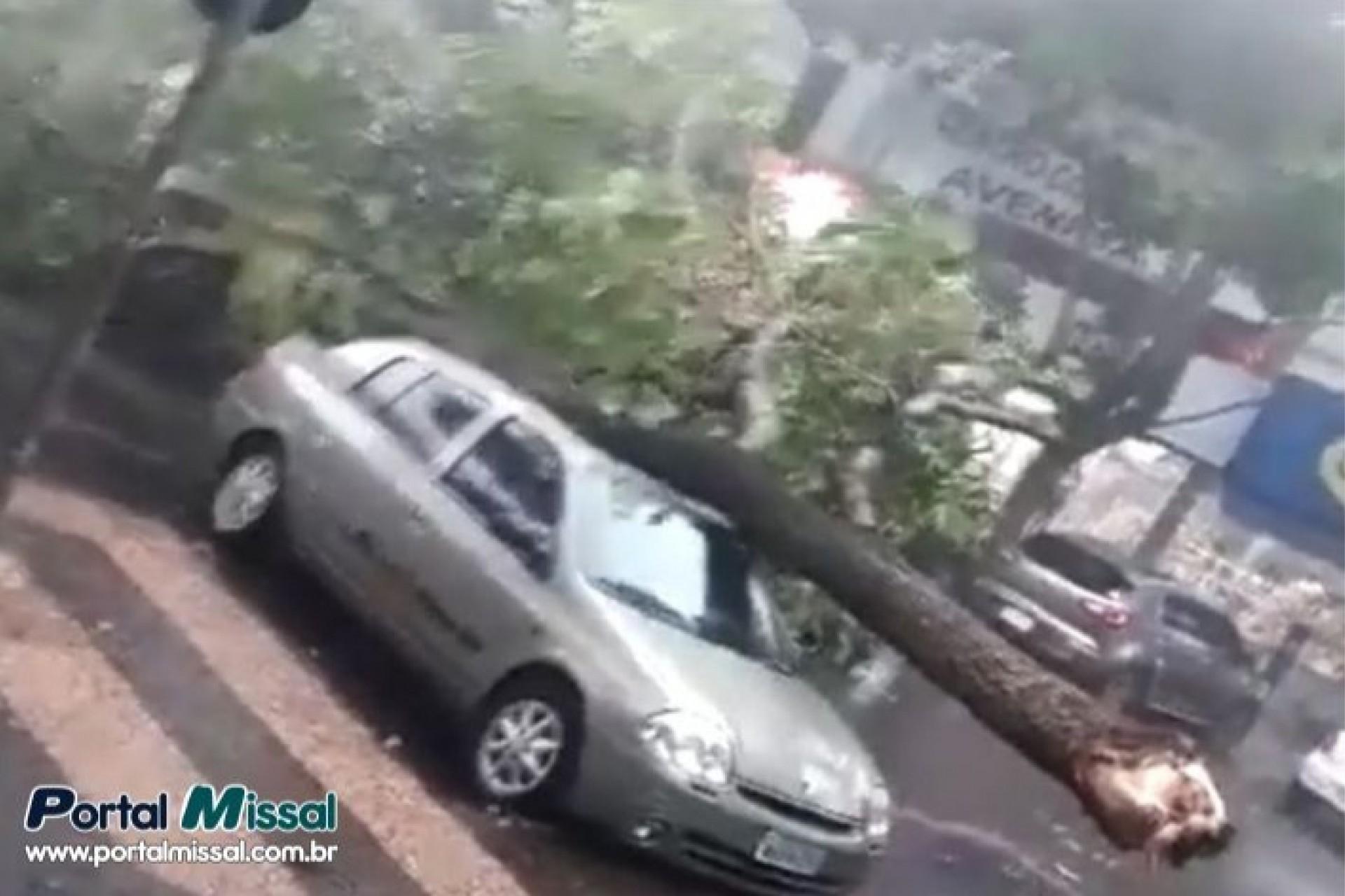 Temporal derruba árvores e causa estragos em Foz do Iguaçu