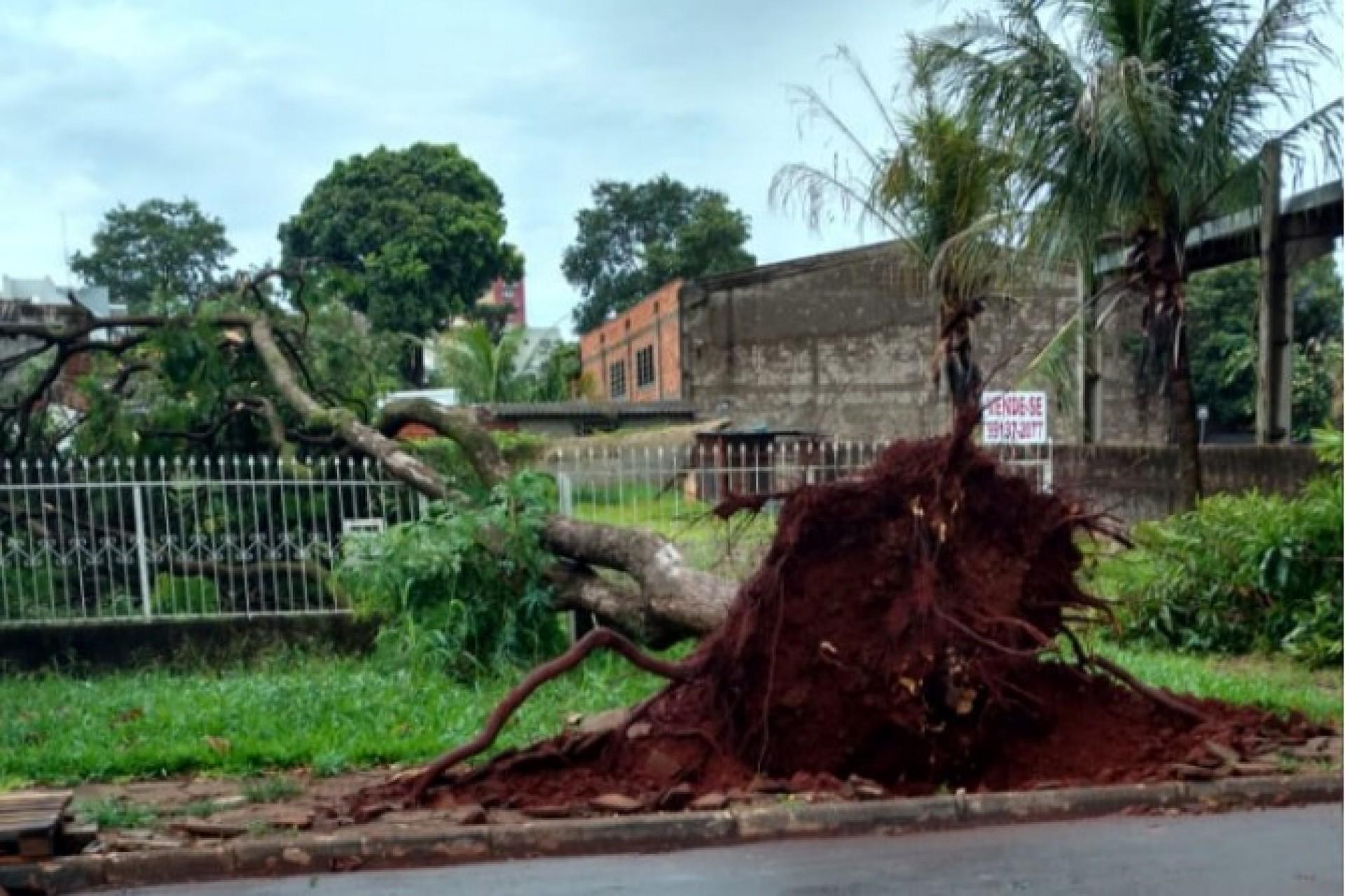 Temporal derruba árvores e destelha casas em São Miguel do Iguaçu