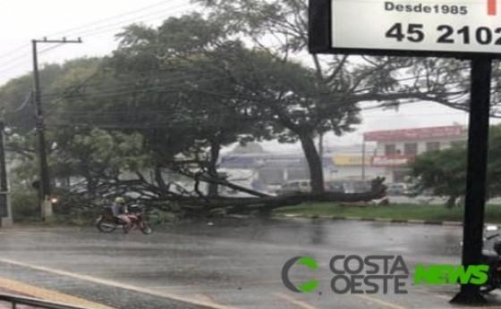 A chuva que caiu no final da manhã derrubou árvores e interditou uma das principais vias em Foz