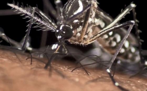 Alto Índice de Infestação e casos de dengue na região alertam também população de Missal