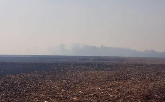 Bombeiros e agricultores combatem incêndio que atingiu lavoura e área de vegetação em Itaipulândia