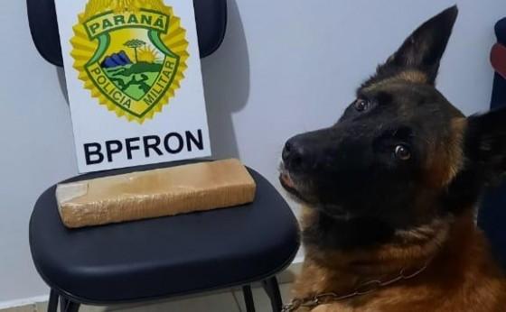 BPFron apreende casal transportando droga na PR 495