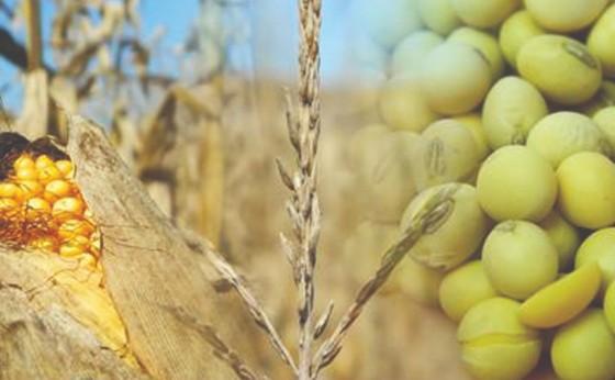 Brasil é o 3º maior exportador agrícola, mas clima ameaça futuro