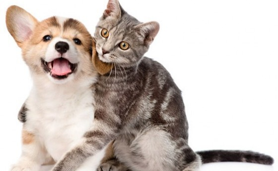 Câmara aprova projeto de controle de natalidade de cães e gatos em Itaipulândia