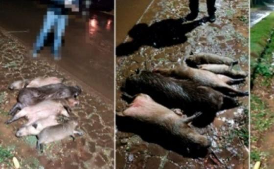 Cinco capivaras morrem atropeladas na rodovia PR 495