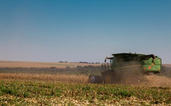 Colheita de Milho está 95% concluída em Missal