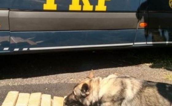 Com ajuda de cão farejador, PRF apreende maconha com passageira de 19 anos em Céu Azul