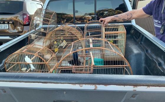 Com pássaros silvestres, homem é encaminhado para a delegacia em Santa Terezinha de Itaipu