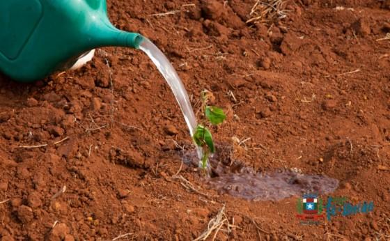 Conservação de Solo e Recomposição da Mata Ciliar são eficazes quanto a manutenção dos rios