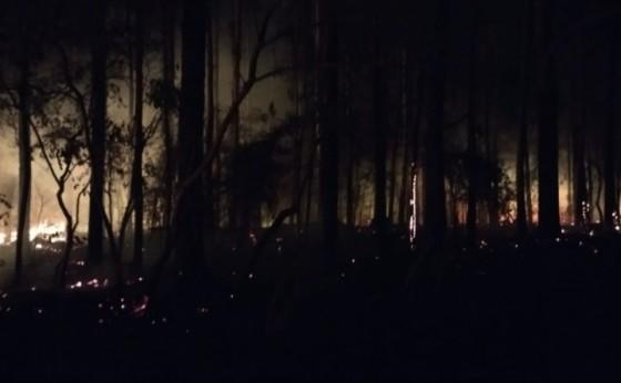 Corpo de bombeiros combatem incêndio em plantação de eucalipto em São Miguel