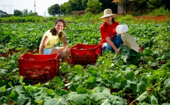 Cresce o número de propriedades certificadas no Oeste do Paraná para a produção de  orgânicos