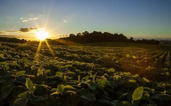 Dia do Agricultor: Apoio do Sicredi é decisivo para desenvolvimento do agronegócio brasileiro