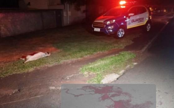 Foz do Iguaçu: Para salvar vida de criança, equipe da GM atira contra pitbulls