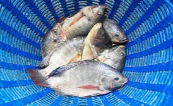 Homem é detido em flagrante furtando peixes de açude