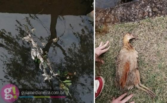 Medianeira: Moradores reclamam de peixes e aves mortas no Rio Bolinha