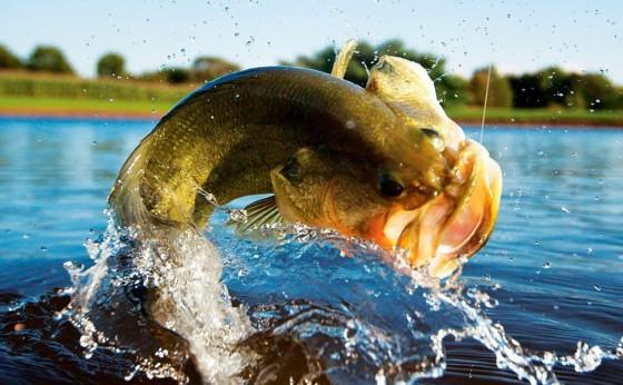 Ministério Público intervém para que Torneio de Pesca não seja realizado em Itaipulândia