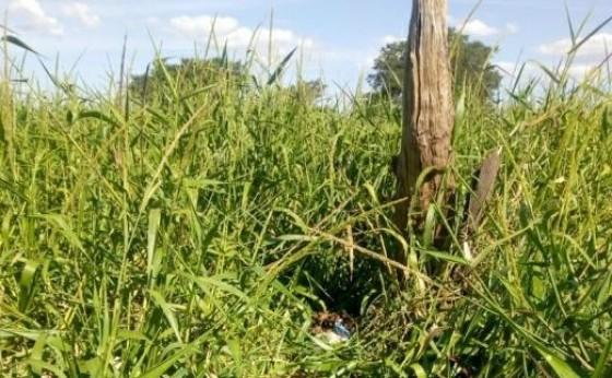 Ossada humana é encontrada por pescador na beira do Lago de Itaipu