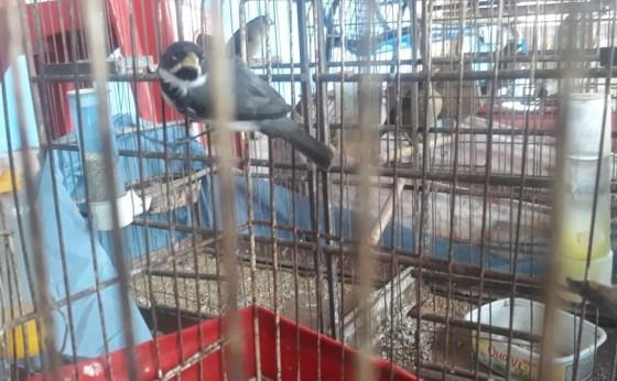 Pássaros silvestres são apreendidos no oeste do Paraná