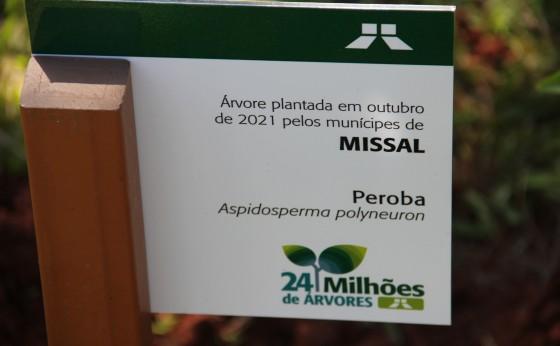 Peroba foi a árvore escolhida em Missal para o plantio Simbólico da Campanha 24 Milhões de Árvores