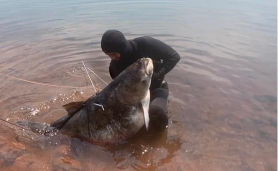 Pescador captura carpa cabeçuda de 70 quilos no Oeste do Paraná