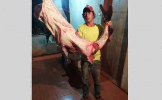 Pintado de 1,55 metro e 30 quilos é fisgado no rio Paraná