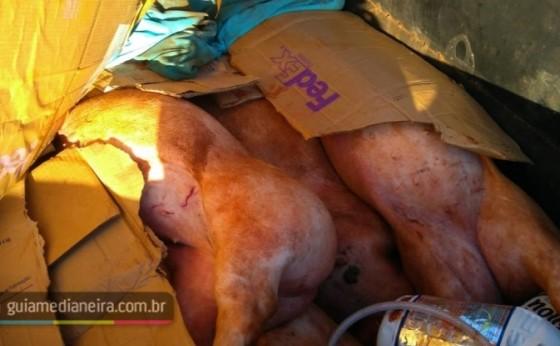 PM prende duas pessoas com porcos furtados em granja em Medianeira