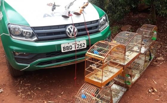 Polícia Ambiental apreende pássaros silvestres e armas