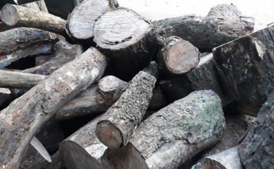 Polícia Ambiental encontra depósito ilegal de madeira e detém uma pessoa em Santa Helena
