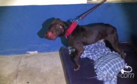 Polícia Civil prende 40 pessoas em rinha internacional e resgata cães