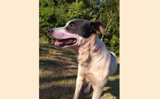 Procura-se cachorrinho que desapareceu no bairro Sítio Verde / Renascer.