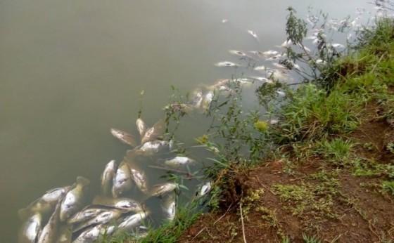 Produtor de peixes tem mais de R$ 70 mil de prejuízo com falta de energia elétrica em Santa Helena