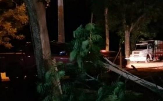 Raio parte árvore ao meio e danifica dois carros em São Miguel do Iguaçu