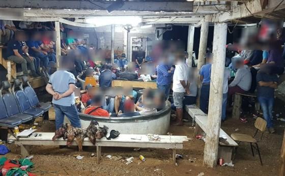 Rinha de galo é fechada após operação da Polícia Ambiental no PR