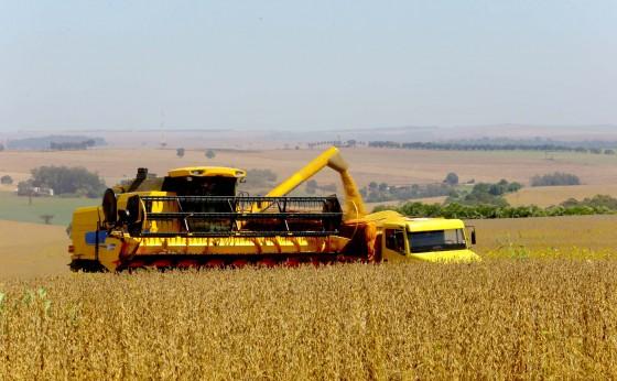Safra de verão deverá chegar a 24,3 milhões de toneladas