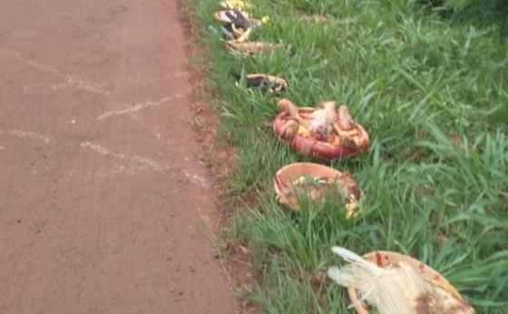 São Miguel do Iguaçu: Ritual com animais mortos é encontrado as margens da BR 277