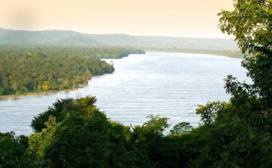 Sicredi recupera áreas de mata nativa e neutraliza CO2 emitido por agências