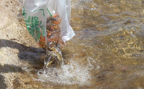 Soltura de peixes no Lago Municipal de Missal